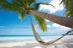 Fototapeta na ścianę - Palma na Plaży - 175x115 cm