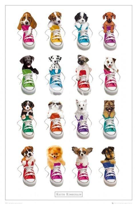 Keith Kimberlin Sneakers - plakat