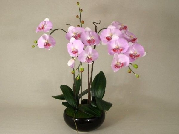 Sztuczny storczyk - Orchidea - W doniczce - 52x85cm