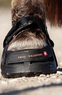 SWISS GALOPPERS - buty dla konia