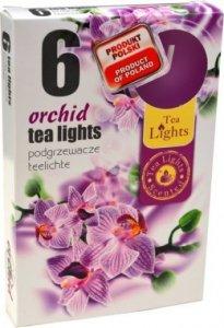 PODGRZEWACZ 6 SZTUK TEA LIGHT ORCHID